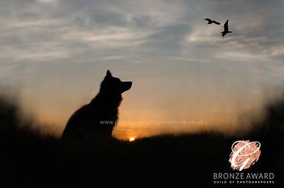 Award Winning Pet Photographer
