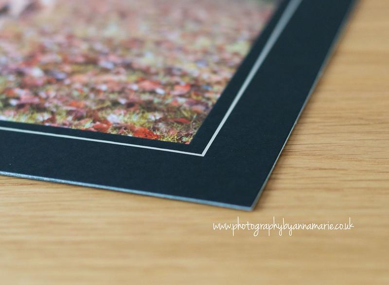 Bordered Prints