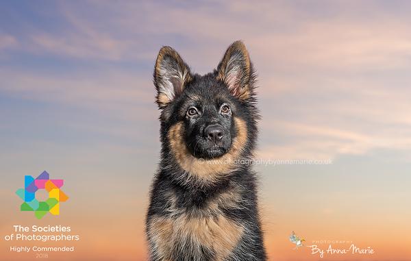 Award Winning Image - Dog Photography