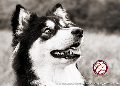 Gloucestershire Dog Photographer