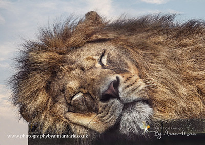 Wildlife Photography - A Thousand Words Photography By Anna-Marie