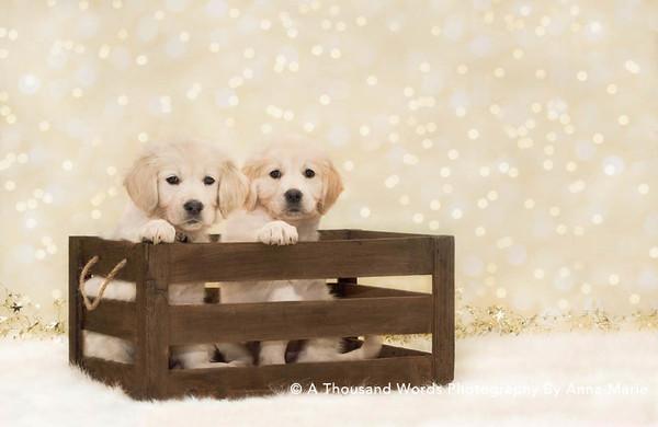Pet Photography - Bristol