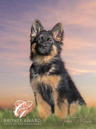 Award Winning Dog Photography