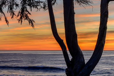 Coast_Trees_Sunset_1_KKD8617