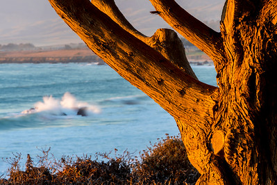 Tree Framing Coastline at Sunset