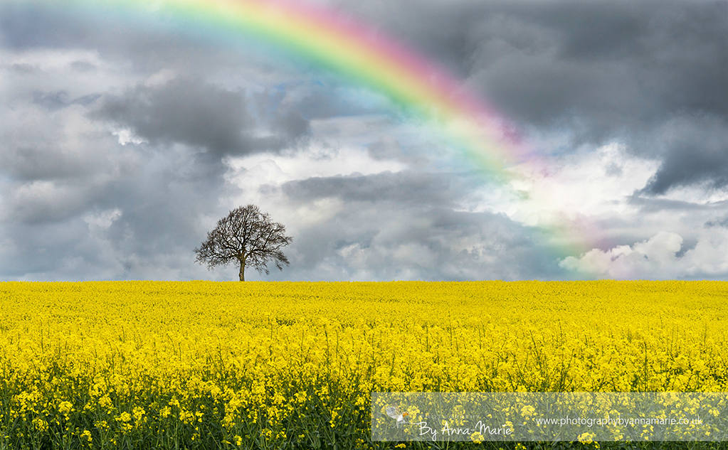 Rainbows and Yellow Fields