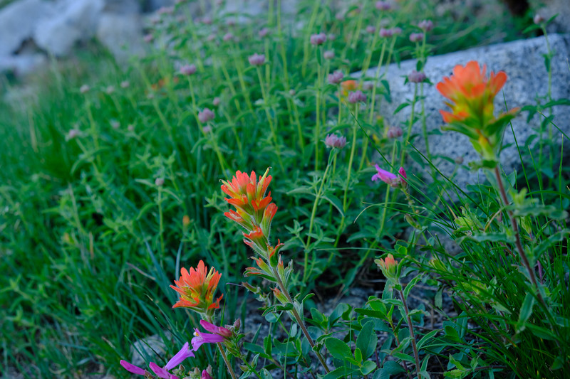 More wildflowers