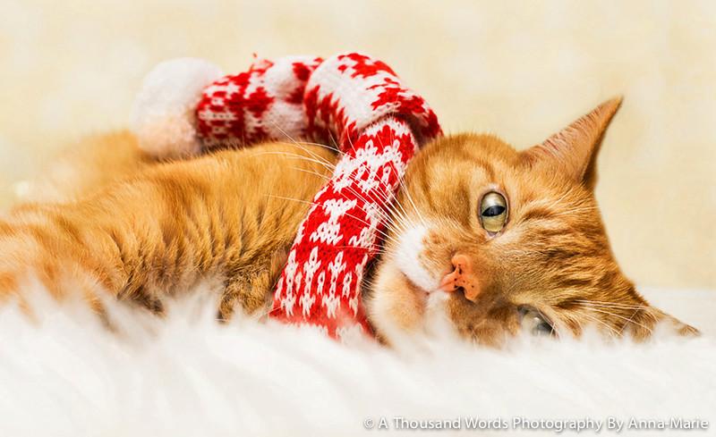 Cat Photographer Bristol