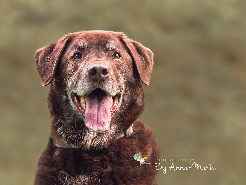 Dog Photography Somerset
