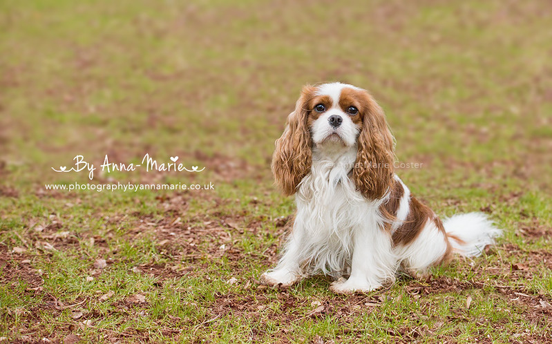 Pet Photography - Anna-Marie Coster