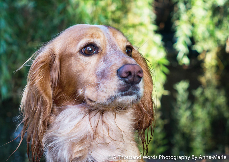 Gloucestershire Pet Photographer