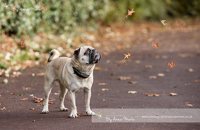Dog Photography in Bristol
