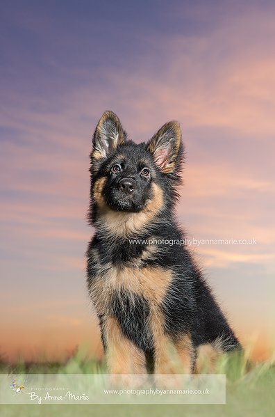 Dog Photographer Yate
