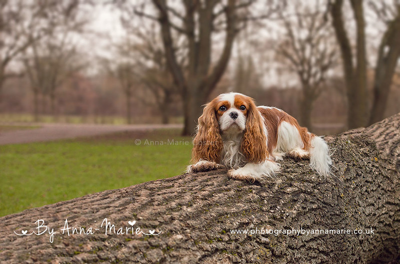 Dog Photography in Somerset