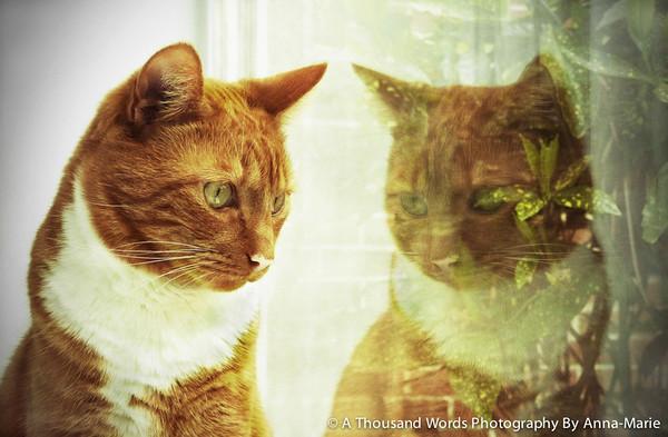 Cat Photography Yate