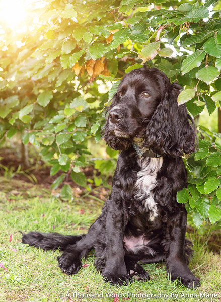 Dog Photography Yate
