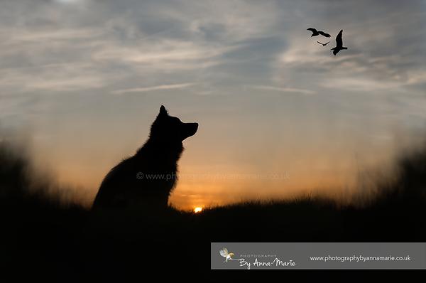 Dog Photography Bristol & Bath