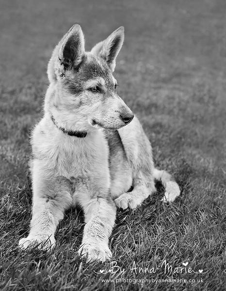 Dog Photographer in Bristol