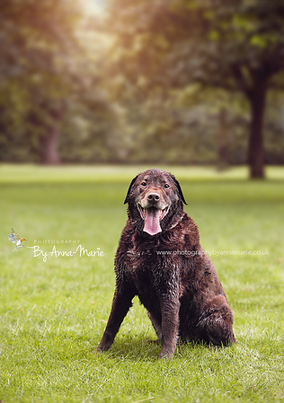 Pet Photographer yate