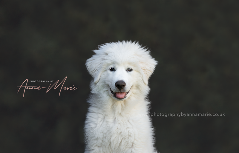 Dog Photographer UK