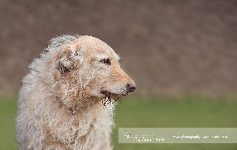 Yate Dog Photographer