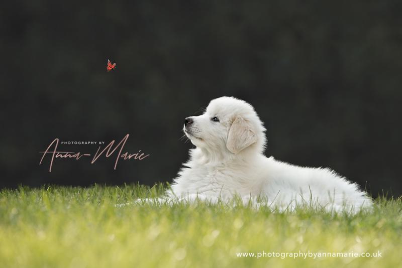 Puppy Photography in Bristol