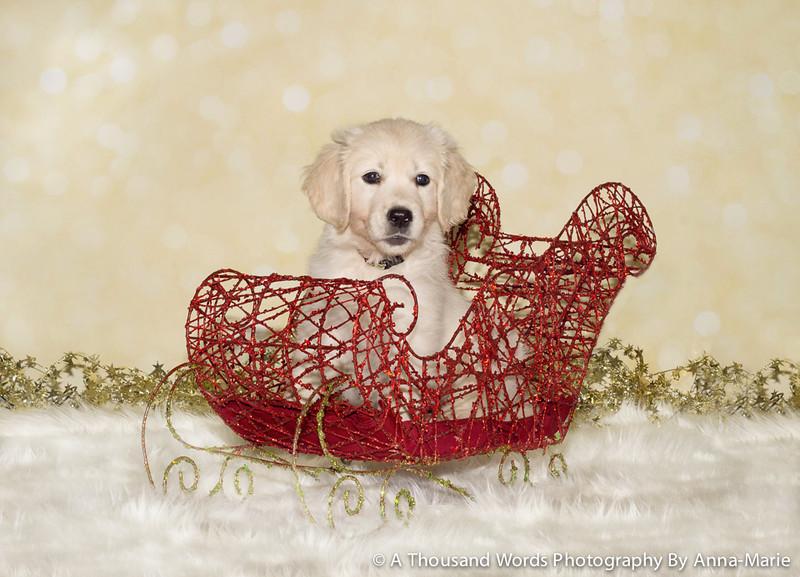 Puppy Photographer Bristol