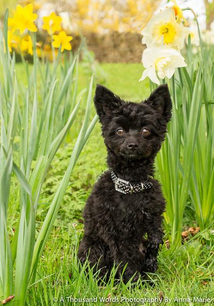 Pet Photographer Gloucestershire