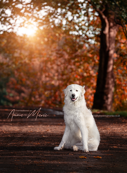 Dog portraits Bristol