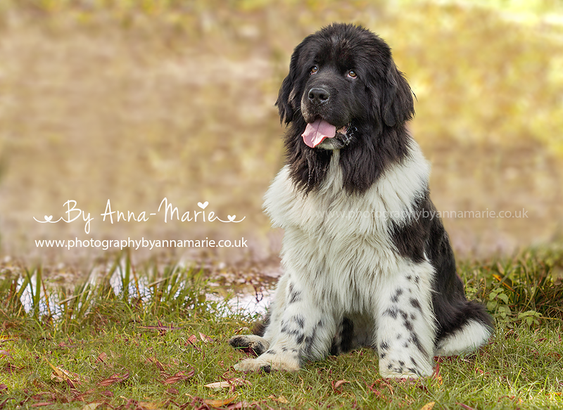 Pet Photographer Somerset