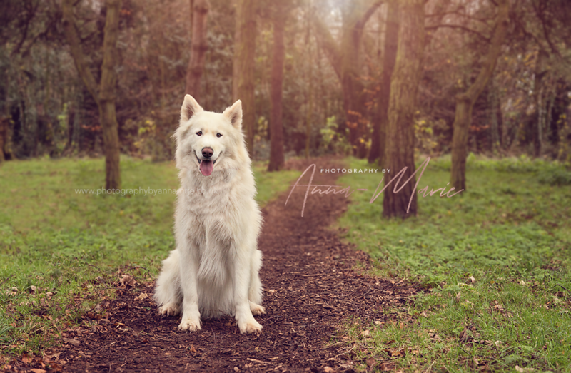 Animal Portrait Photography - Bristol