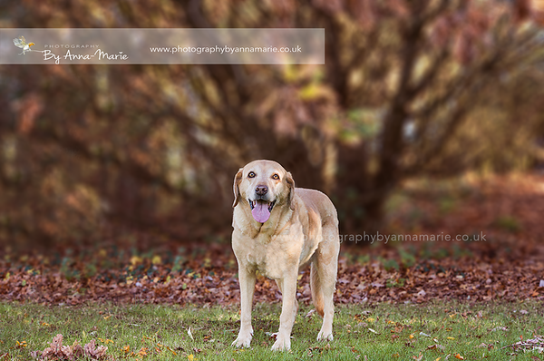 Dog Photography South Gloucestershire