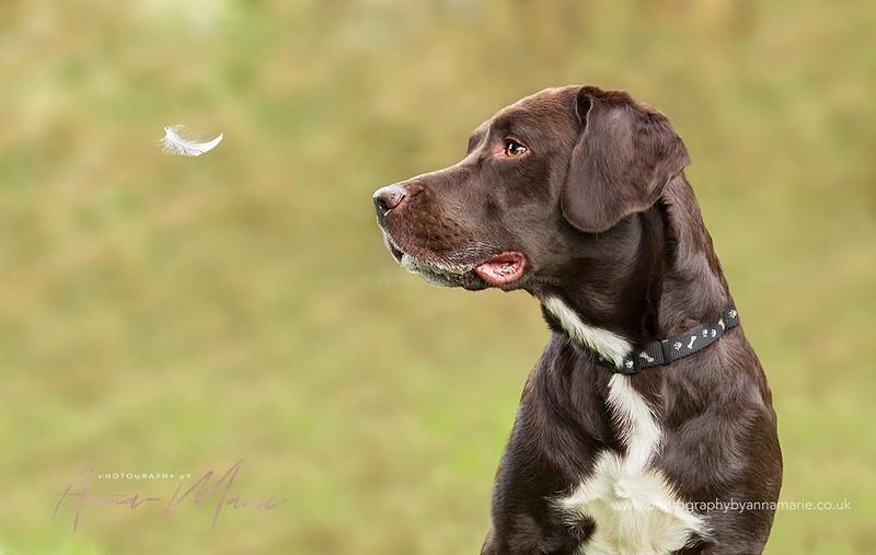 Dog Photographer Bristol
