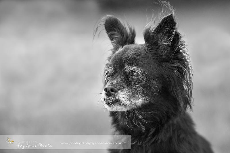 Pet Portrait Photography - Bristol