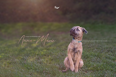 Dog Photographer Somerset