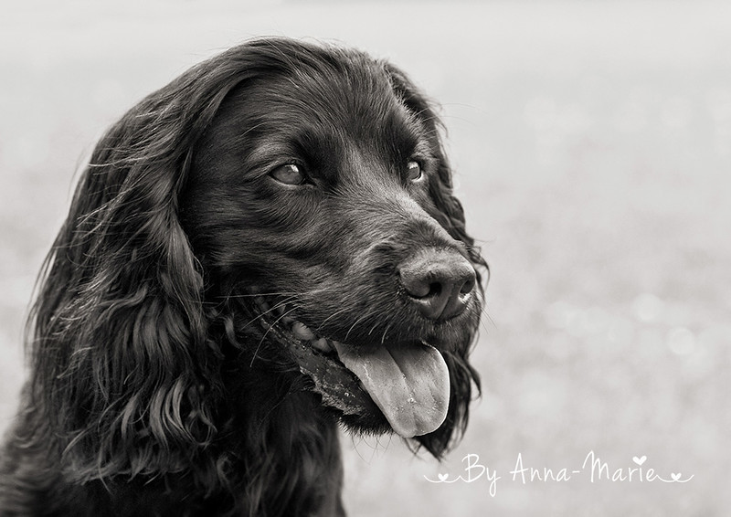 Pet Photography Gloucestershire