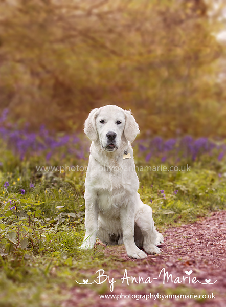 Pet Photographer Bristol