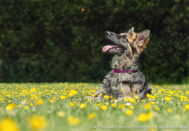 Award Winning Pet Photographer Bristol