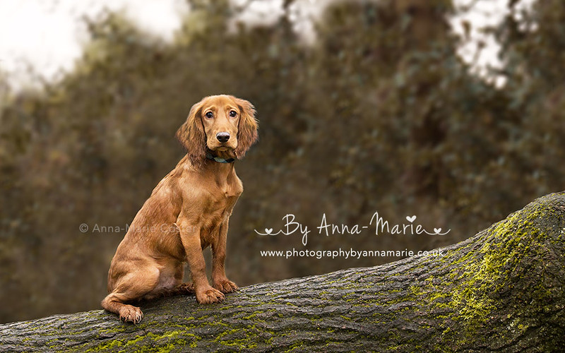 Anna-Marie Coster Pet Portraits