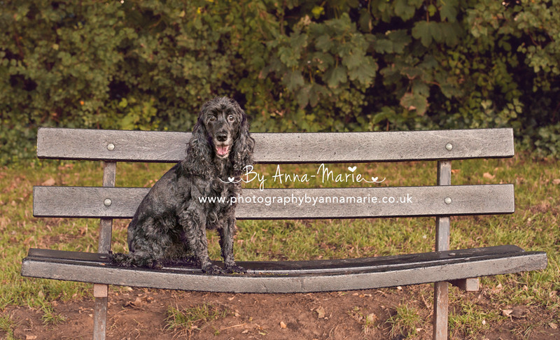Pet Photography in Bristol