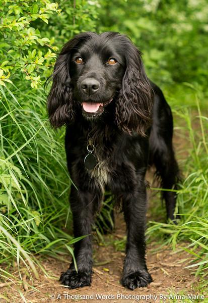 Bradley Stoke Pet Photographer