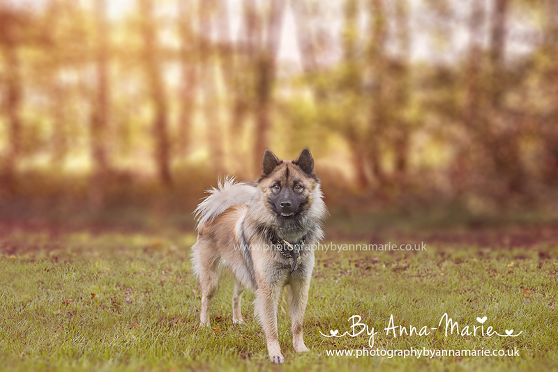 Dog Photography South West England