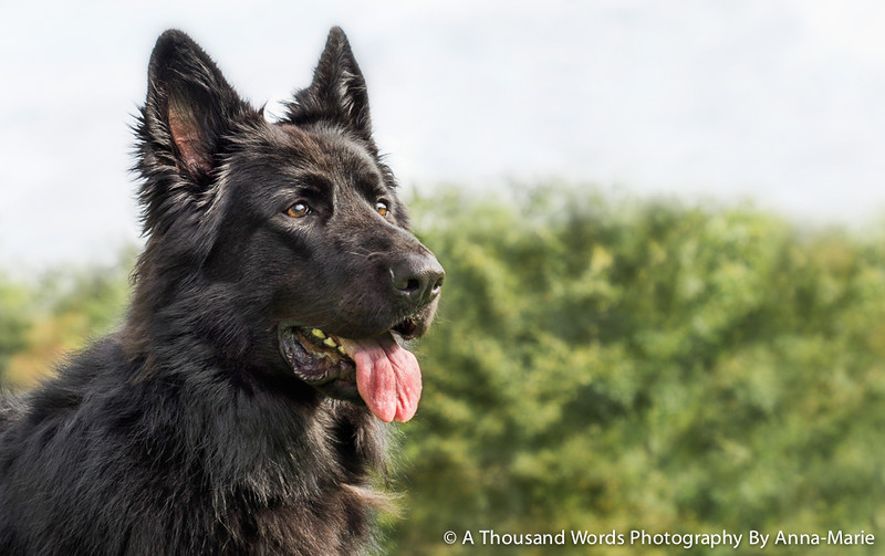 Dog Photography Bristol