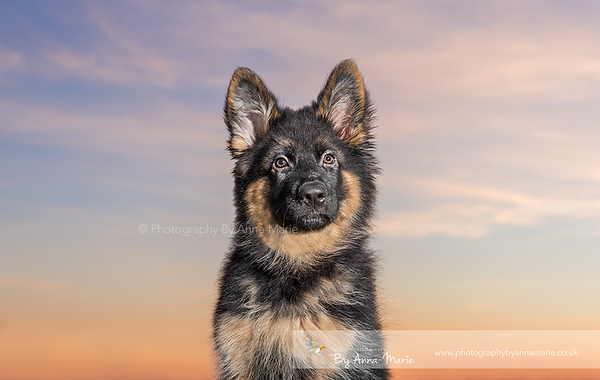 Dog Photography South West UK