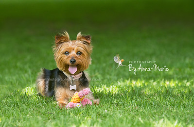 Award Winning Dog Photographer