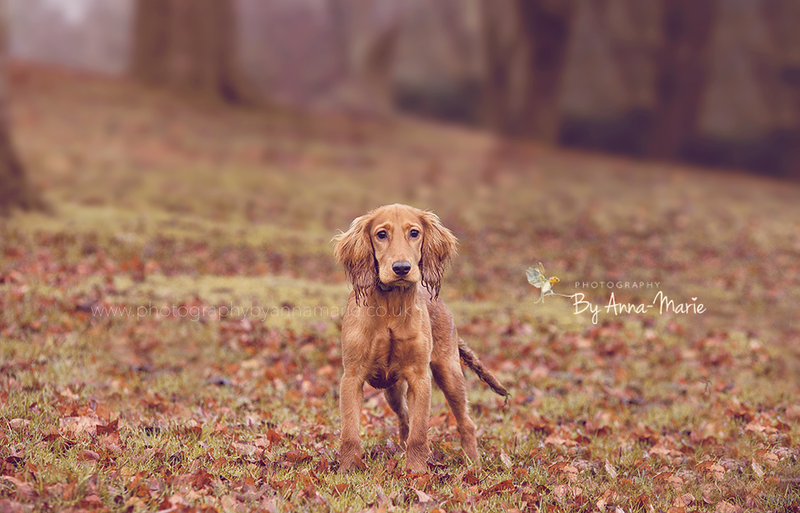 Pet Photography in Autumn