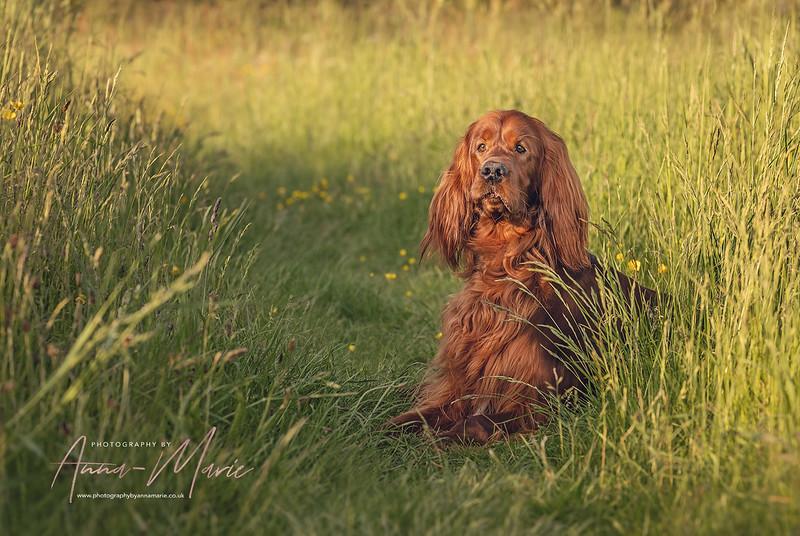 Pet Photographer Bristol