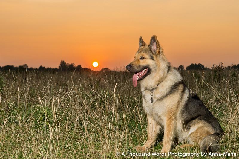 Dog Photographer Bath