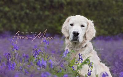 Bristol Dog Photographer