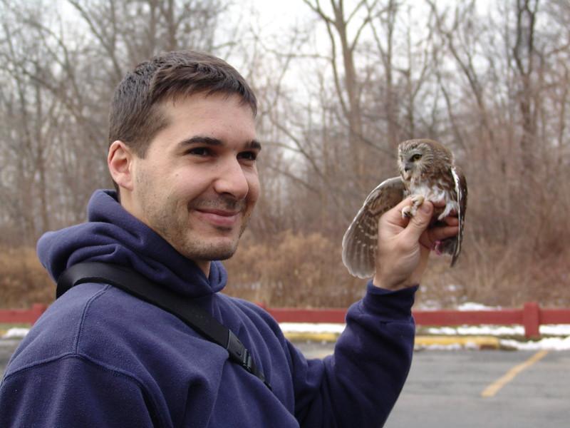 Banding wintering Saw Whet Owls, Bronx, New York